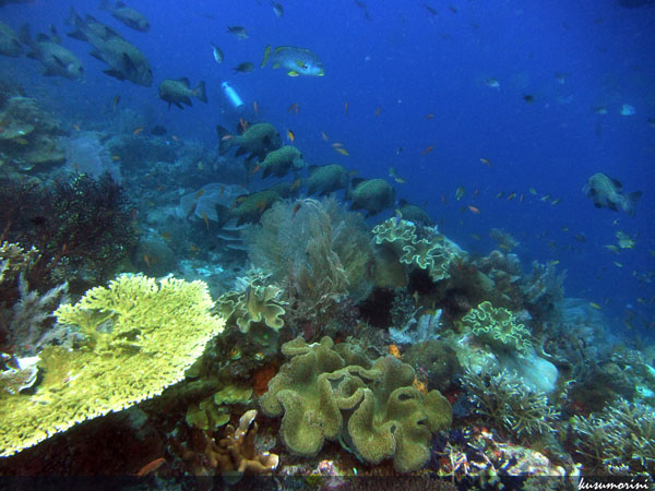 Abundant Corals & Fishes everywhere!