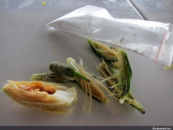 Gigit pinang, cocol kapur ke sirih, lalu kunyah