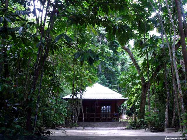 Cottage surrounded by jungle