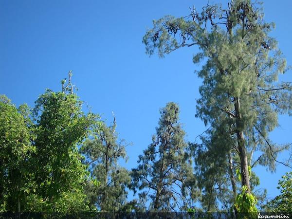 Pulau Um dikenal sebagai habitat kelelawar dan merpati